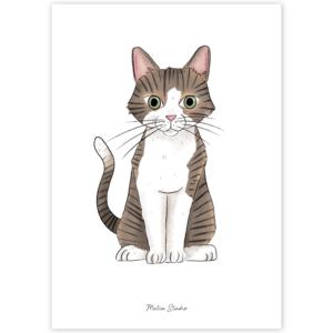 CAT | DISCO